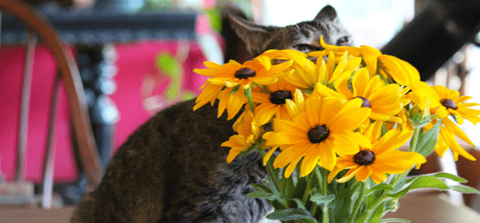 Как отпугнуть кота от цветов