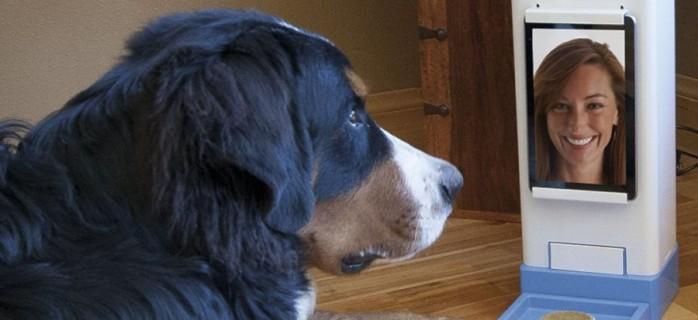 6 умных девайсов для владельцев домашних животных