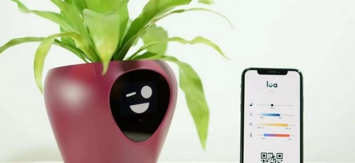 Smart-технологии для ухода за комнатными растениями: умный цветочный горшок